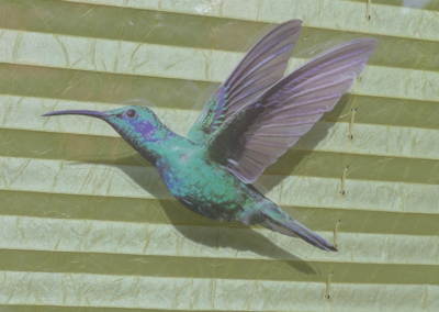 Ein Kolibri im Haus